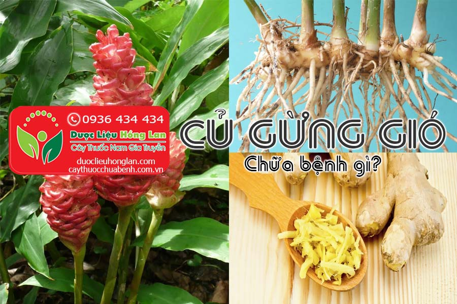 CU-GUNG-GIO-CHUA-BENH-GI-DUOC-LIEU-HONG-LAN