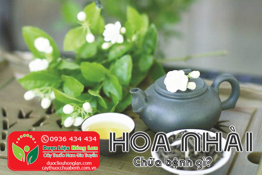 HOA-NHAI-CHUA-BENH-GI-CTY-DUOC-LIEU-HONG-LAN