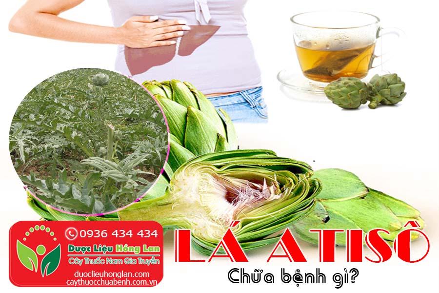 LA-ATISO-CHUA-BENH-GI-CTY-DUOC-LIEU-HONG-LAN