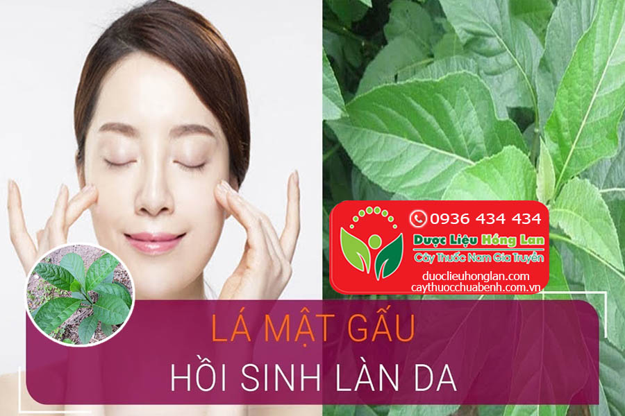 LA-CAY-MAT-GAU-CHUA-BENH-GI-DUOC-LIEU-HONG-LAN
