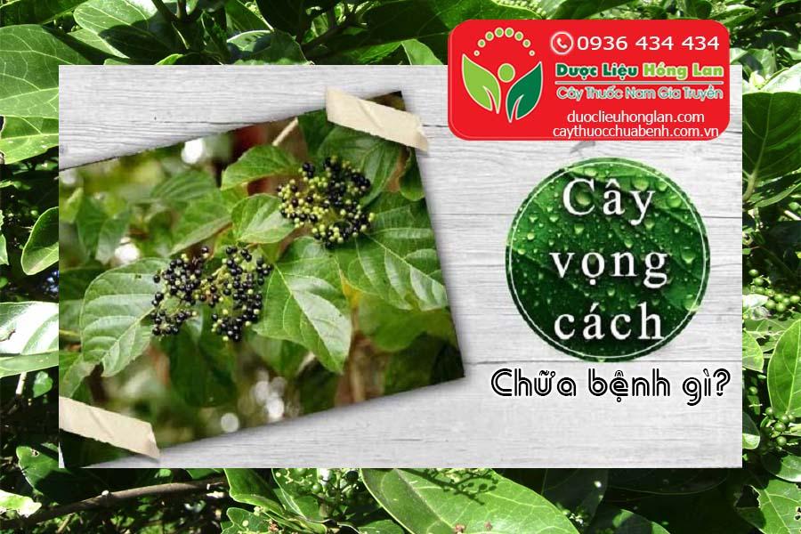 LA-CAY-VONG-CACH-CHUA-BENH-GI-CTY-DUOC-LIEU-HONG-LAN