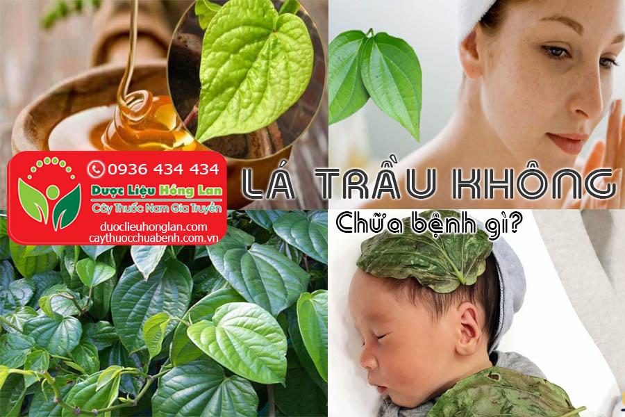 LA-TRAU-KHONG-CHUA-BENH-GI-CTY-DUOC-LIEU-HONG-LAN