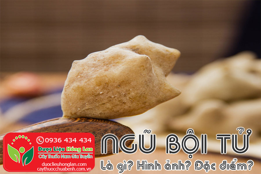 NGU-BOI-TU-LA-GI-HINH-ANH-DAC-DIEM-CTY-DUOC-LIEU-HONG-LAN