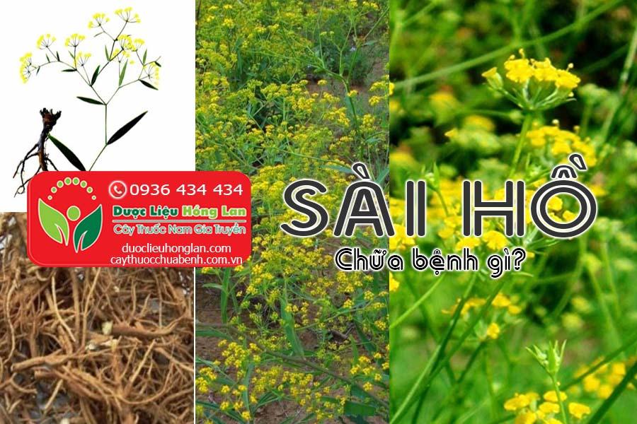 SAI-HO-CHUA-BENH-GI-CTY-DUOC-LIEU-HONG-LAN