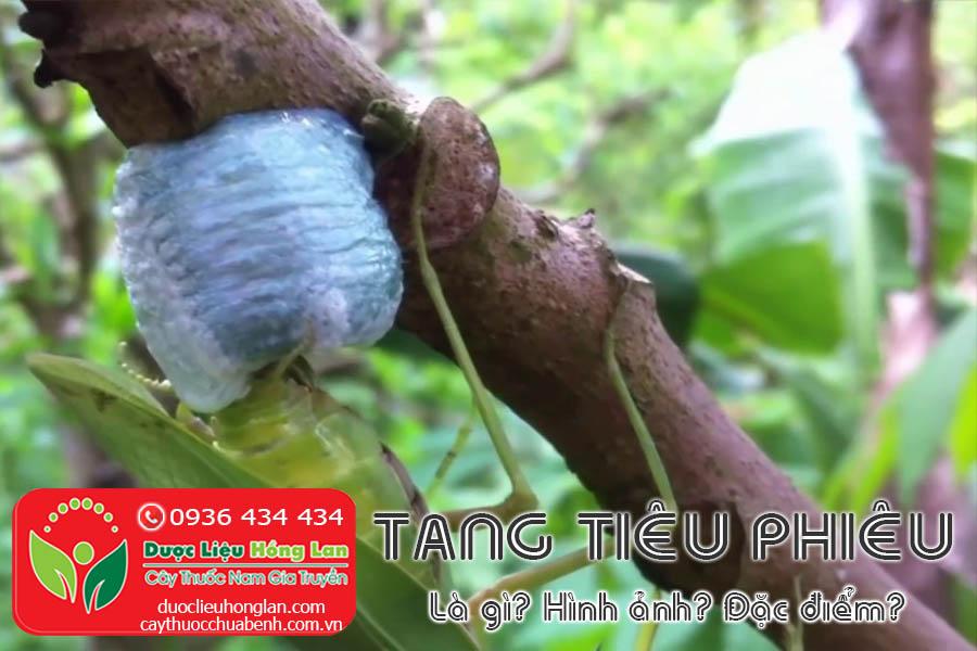 TANG-TIEU-PHIEU-LA-GI-HANH-ANH-DAC-DIEM-CTY-DUOC-LIEU-HONG-LAN