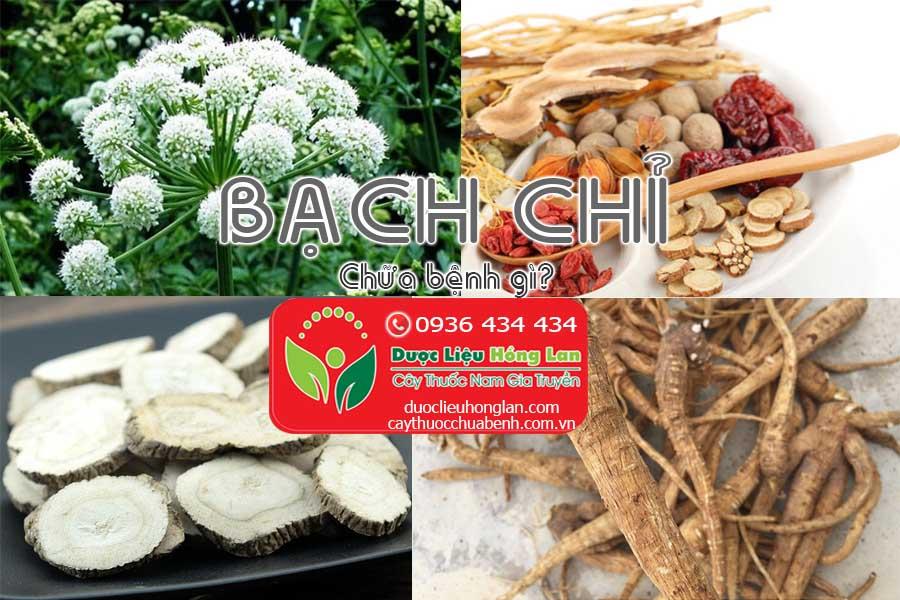 VI-THUOC-BACH-CHI-CHUA-BENH-GI-CTY-DUOC-LIEU-HONG-LAN