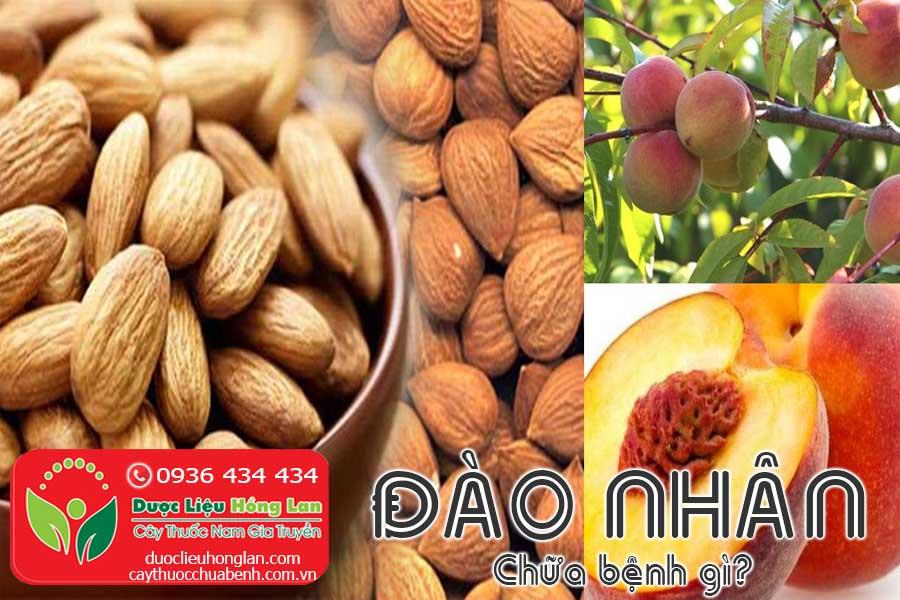VI-THUOC-DAO-NHAN-CHUA-BENH-GI-CTY-DUOC-LIEU-HONG-LAN