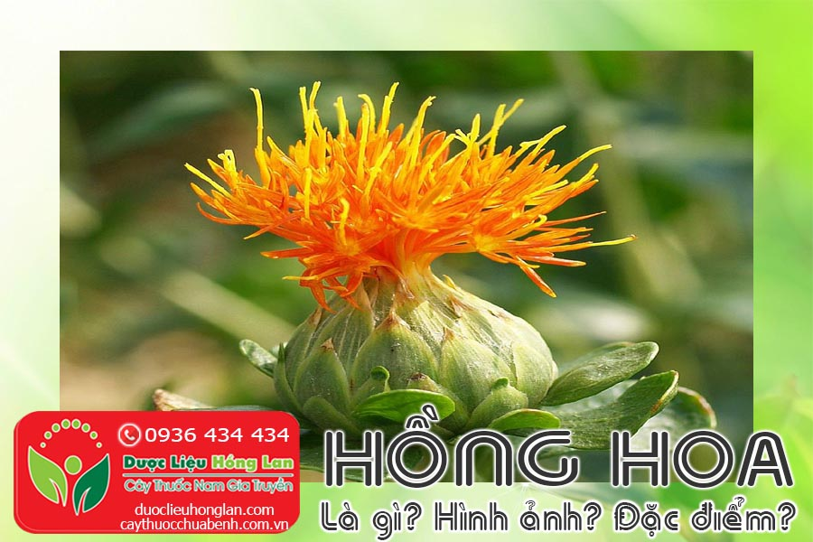 VI-THUOC-HONG-HOA-LA-GI-HINH-ANH-DAC-DIEM-CTY-DUOC-LIEU-HONG-LAN