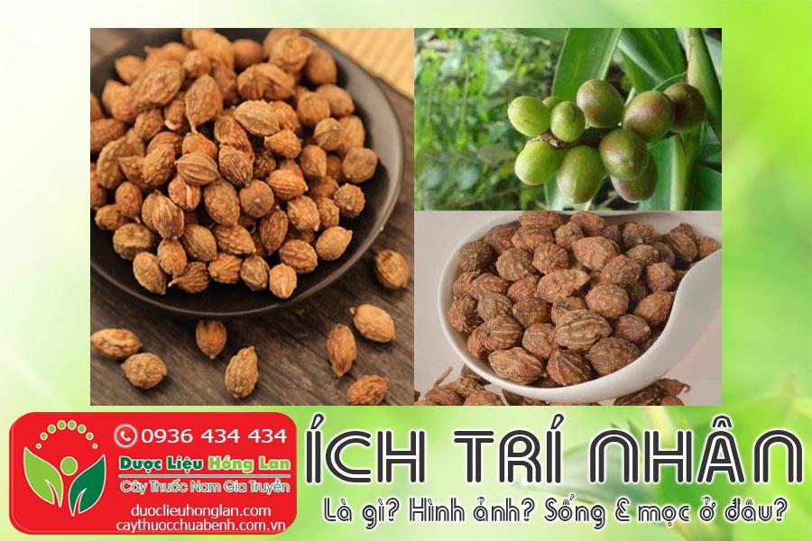 VI-THUOC-ICH-TRI-NHAN-LA-GI-HINH-ANH-SONG-VA-MOC-O-DAU-CTY-DUOC-LIEU-HONG-LAN