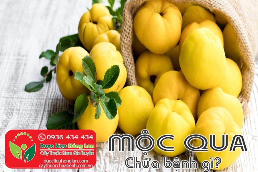 VI-THUOC-MOC-QUA-CHUA-BENH-GI-CTY-DUOC-LIEU-HONG-LAN
