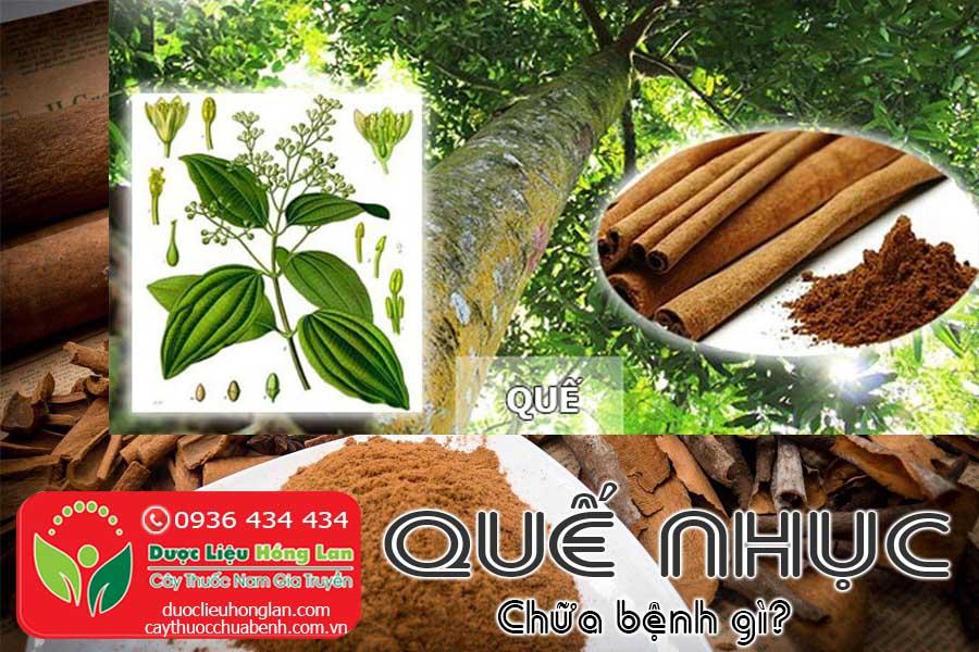 VI-THUOC-QUE-NHUC-CHUA-BENH-GI-CTY-DUOC-LIEU-HONG-LAN
