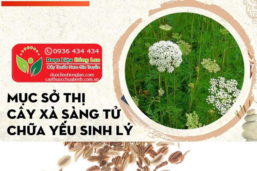 XA-SANG-TU-CHUA-BENH-YEU-SINH-LY-CTY-DUOC-LIEU-HONG-LAN