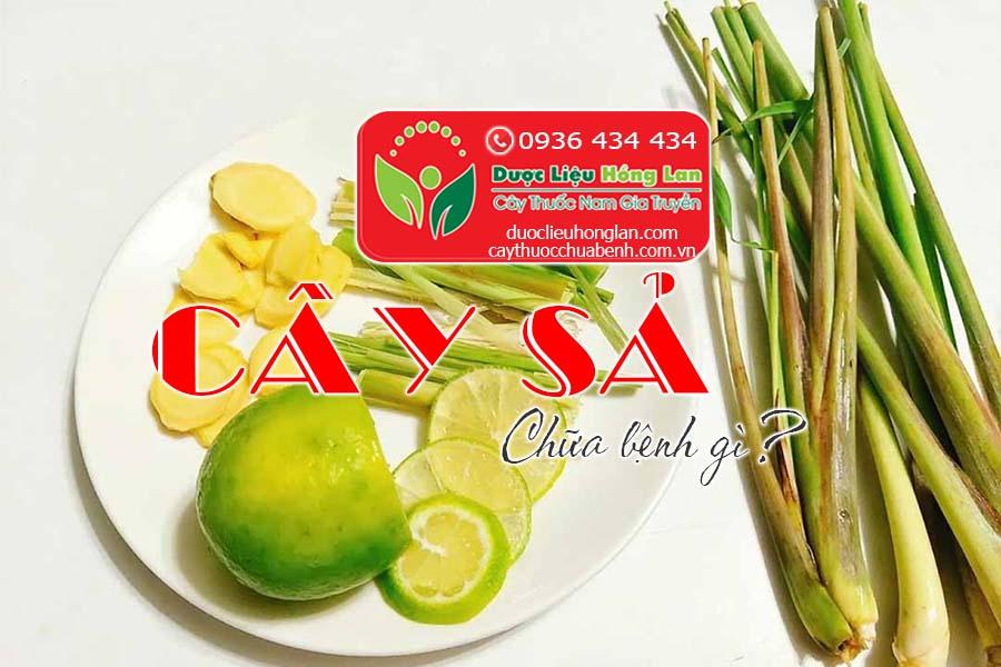 LA-CU-CAY-SA-CHUA-BENH-GI-CTY-DUOC-LIEU-HONG-LAN