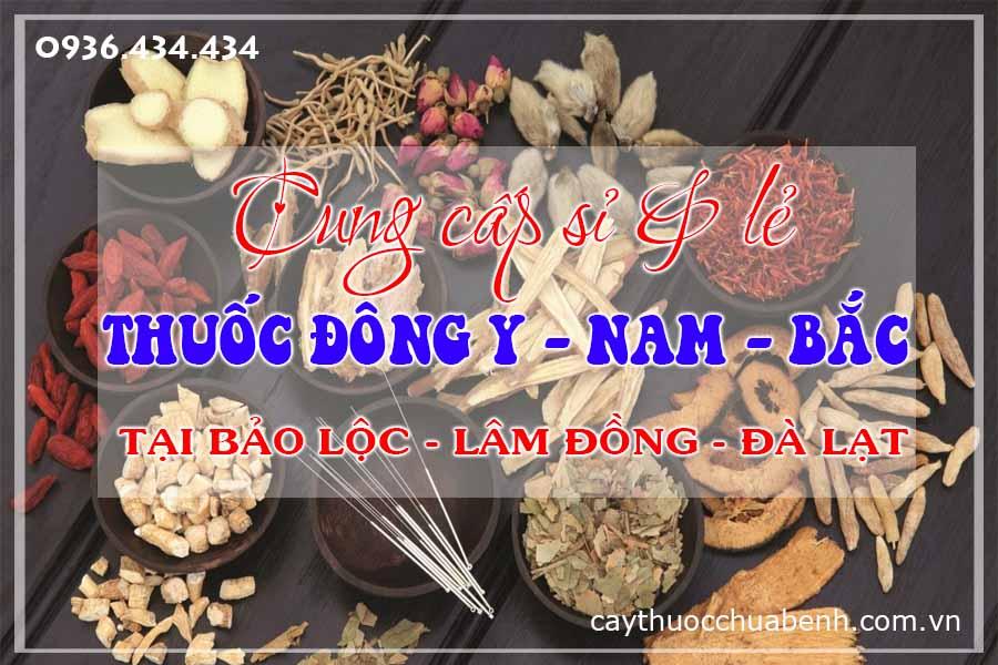 bao-loc-lam-dong-da-lat-mua-ban-si-le-thuoc-dong-y-nam-bac-ctyduoclieuhonglan