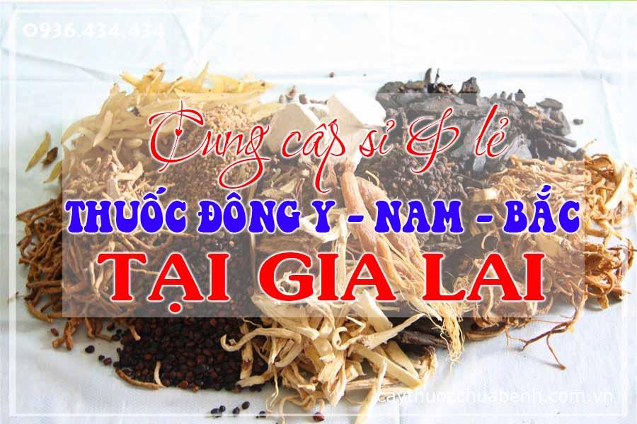 gia-lai-pleiku-mua-ban-si-le-thuoc-dong-y-nam-bac-ctyduoclieuhonglan