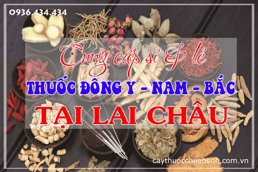 lai-chau-mua-ban-si-le-thuoc-dong-y-nam-bac-ctyduoclieuhonglan