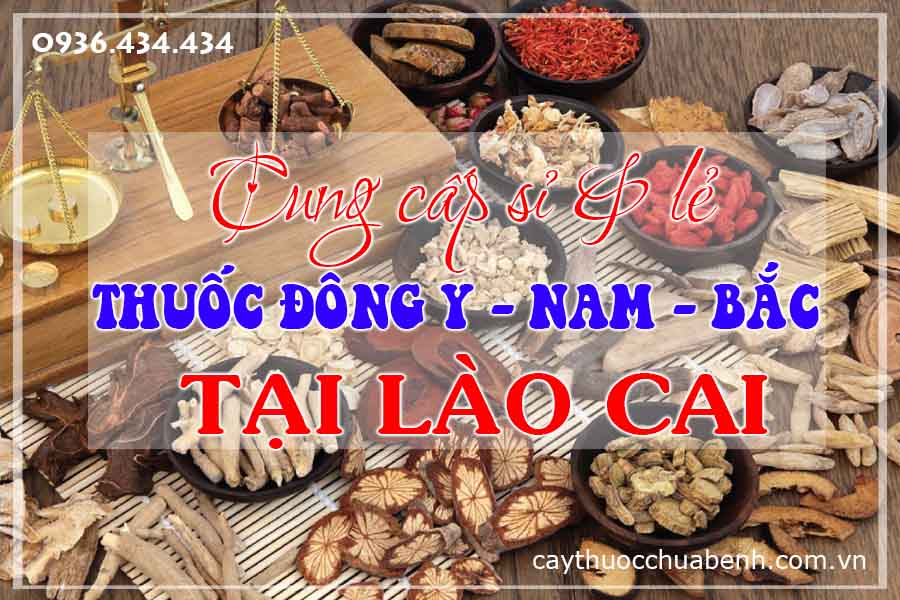 lao-cai-sapa-mua-ban-si-le-thuoc-dong-y-nam-bac-ctyduoclieuhonglan