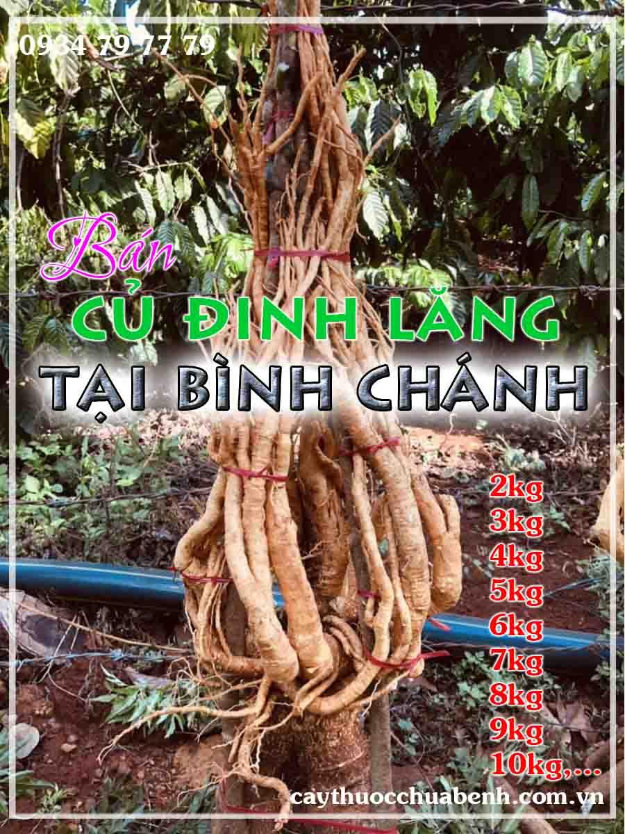 mua-cu-dinh-lang-tuoi-nep-la-nho-ngam-ruou-o-dau-tai-binh-chanh- ctyduoclieuhonglan