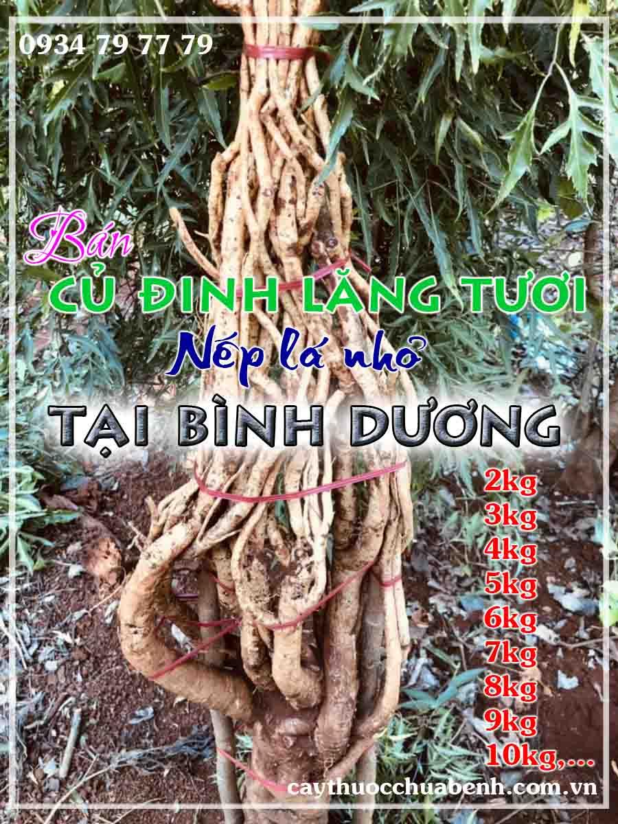 mua-cu-dinh-lang-tuoi-nep-la-nho-ngam-ruou-o-dau-tai-binh-duong- ctyduoclieuhonglan