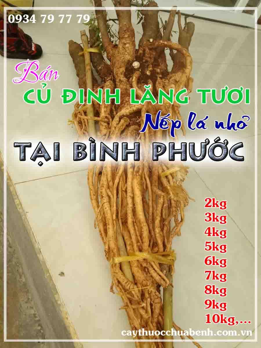 mua-cu-dinh-lang-tuoi-nep-la-nho-ngam-ruou-o-dau-tai-binh-phuoc- ctyduoclieuhonglan