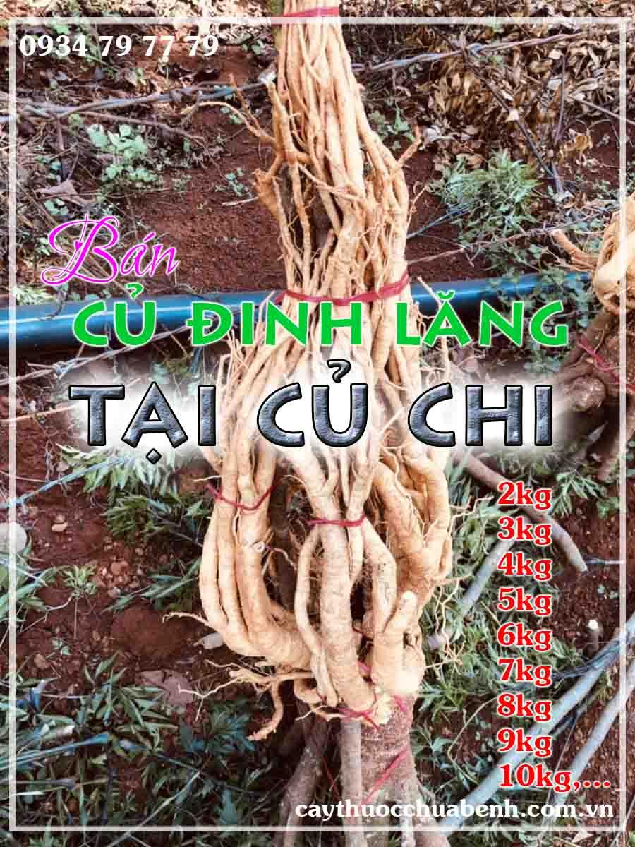 mua-cu-dinh-lang-tuoi-nep-la-nho-ngam-ruou-o-dau-tai-cu-chi- ctyduoclieuhonglan