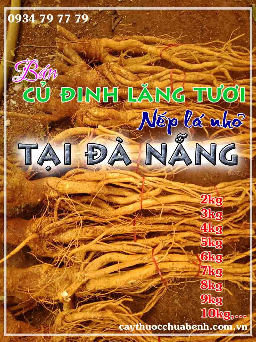 mua-cu-dinh-lang-tuoi-nep-la-nho-ngam-ruou-o-dau-tai-da-nang- ctyduoclieuhonglan