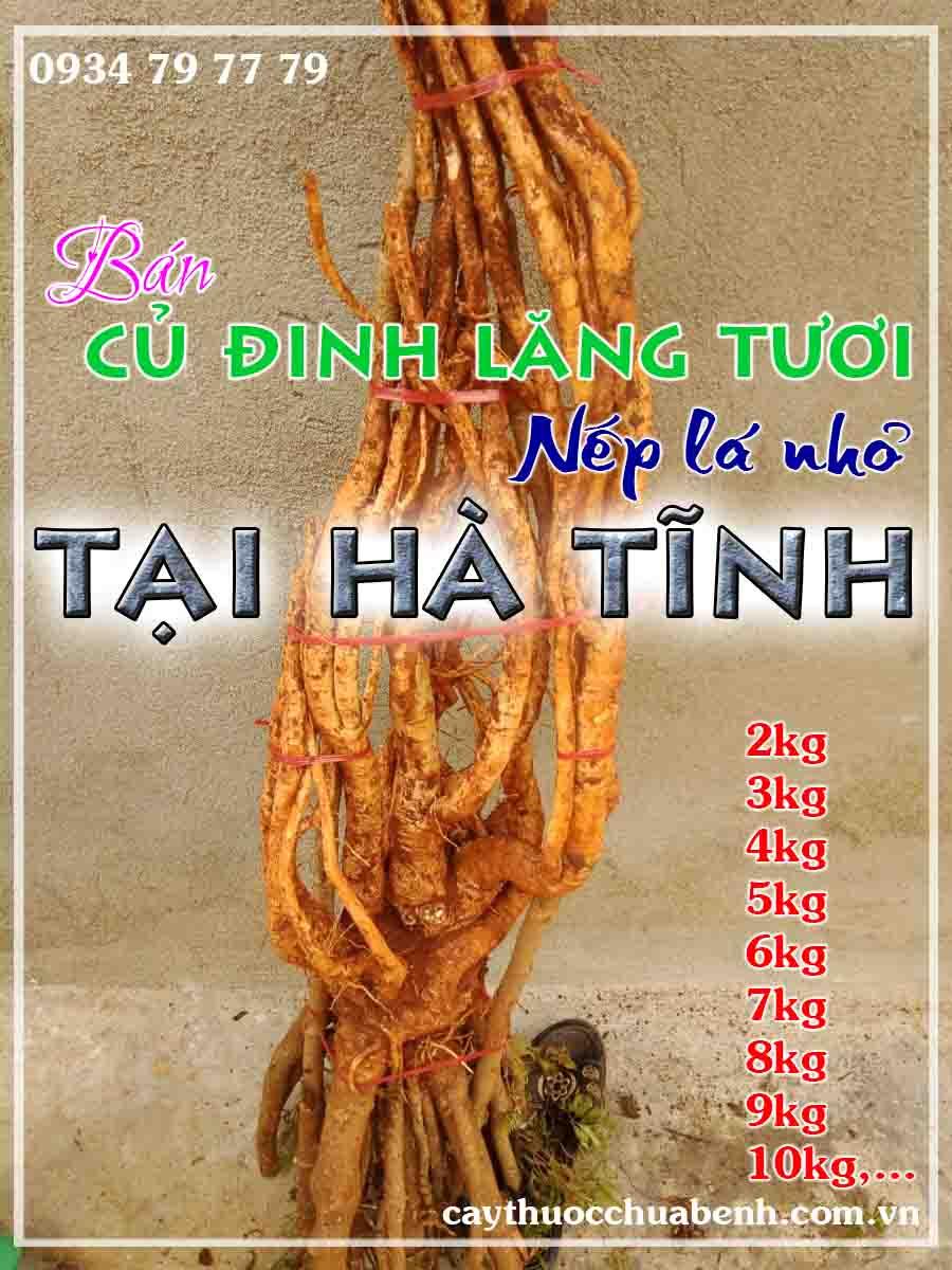 mua-cu-dinh-lang-tuoi-nep-la-nho-ngam-ruou-o-dau-tai-ha-tinh- ctyduoclieuhonglan