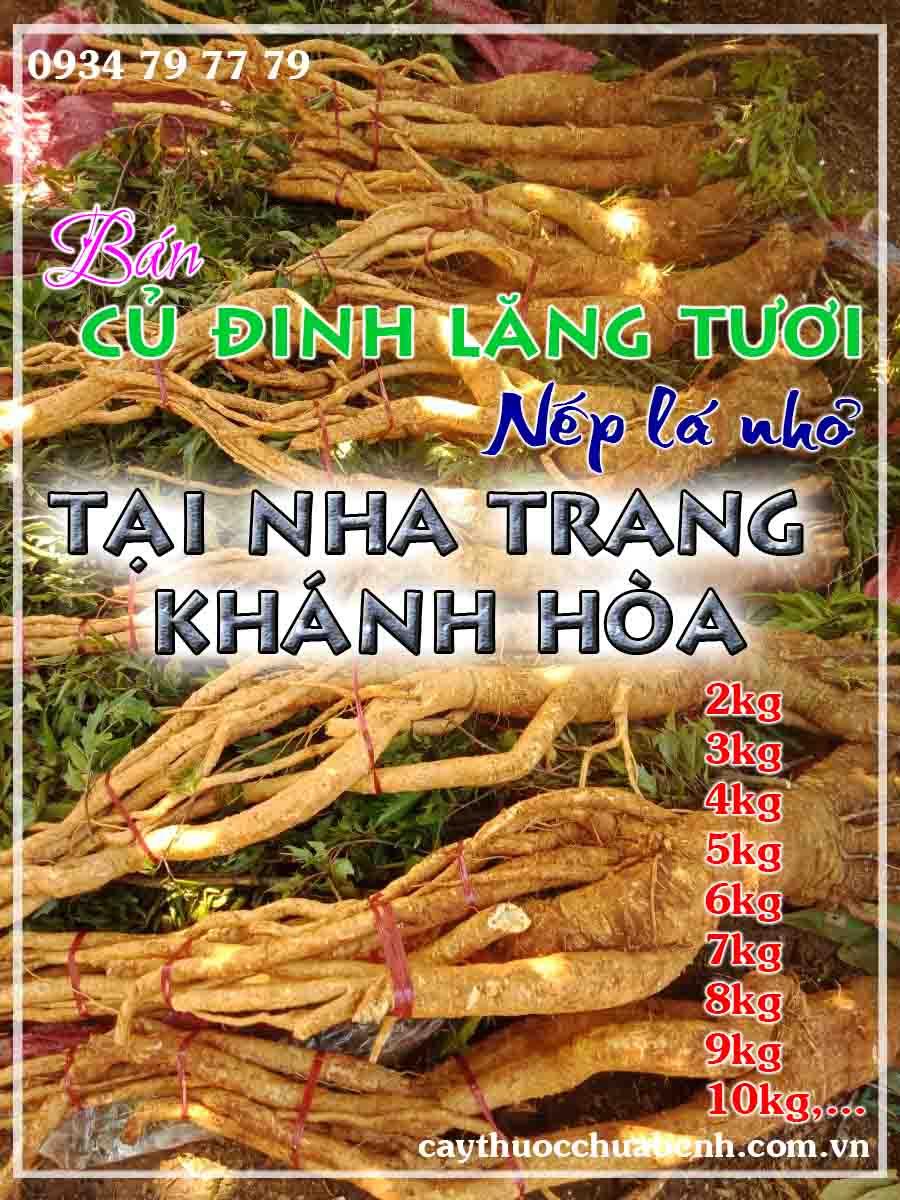 mua-cu-dinh-lang-tuoi-nep-la-nho-ngam-ruou-o-dau-tai-nha-trang-khanh-hoa- ctyduoclieuhonglan