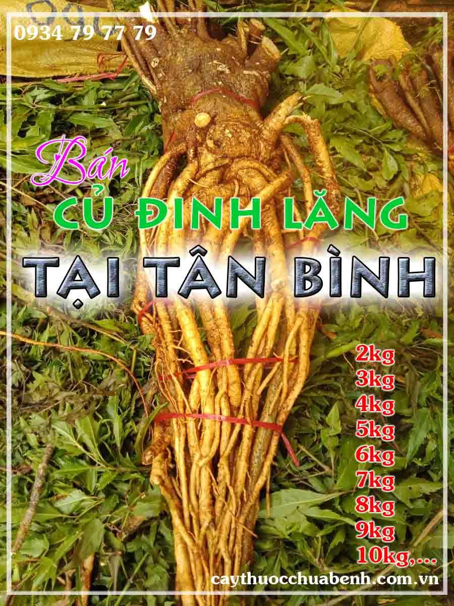 mua-cu-dinh-lang-tuoi-nep-la-nho-ngam-ruou-o-dau-tai-quan-tan-binh-ctyduoclieuhonglan