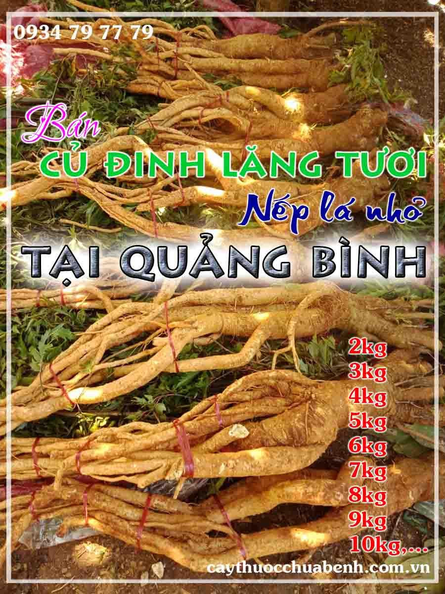 mua-cu-dinh-lang-tuoi-nep-la-nho-ngam-ruou-o-dau-tai-quang-binh- ctyduoclieuhonglan