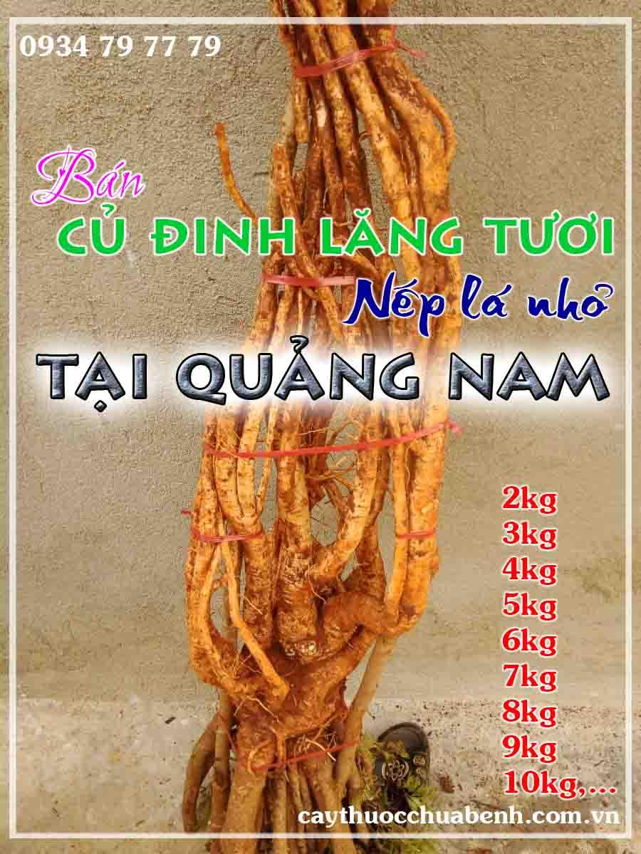 mua-cu-dinh-lang-tuoi-nep-la-nho-ngam-ruou-o-dau-tai-quang-nam-ctyduoclieuhonglan