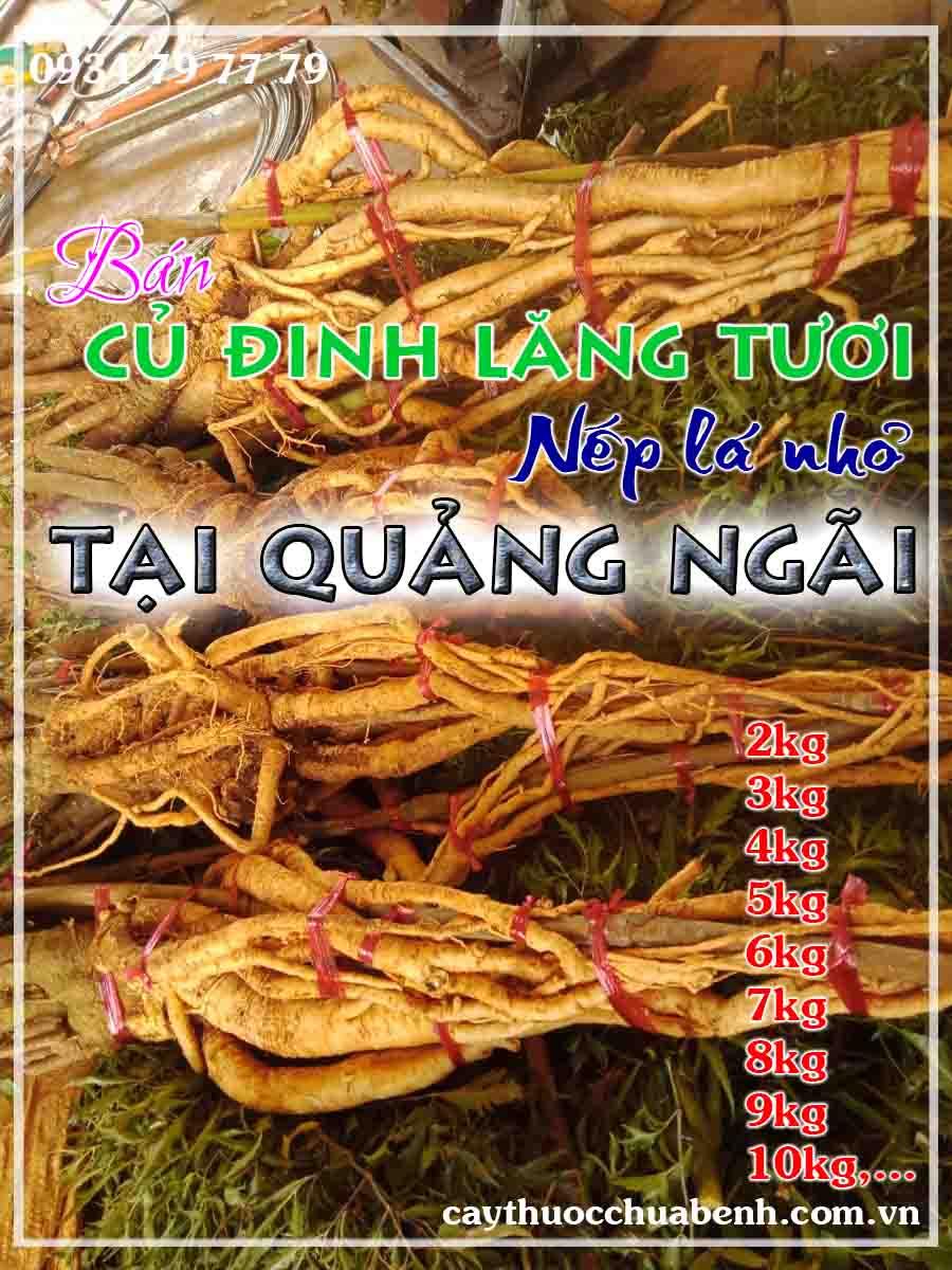 mua-cu-dinh-lang-tuoi-nep-la-nho-ngam-ruou-o-dau-tai-quang-ngai- ctyduoclieuhonglan