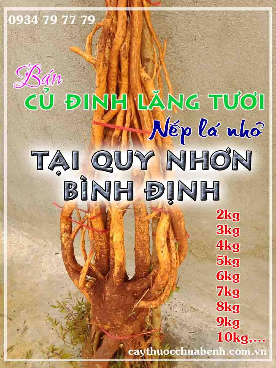 mua-cu-dinh-lang-tuoi-nep-la-nho-ngam-ruou-o-dau-tai-quy-nhon-binh-dinh- ctyduoclieuhonglan
