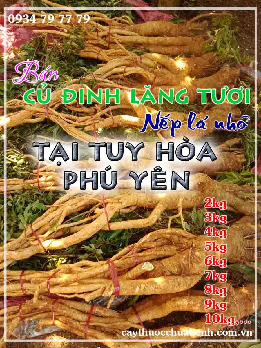 mua-cu-dinh-lang-tuoi-nep-la-nho-ngam-ruou-o-dau-tai-tuy-hoa-phu-yen- ctyduoclieuhonglan