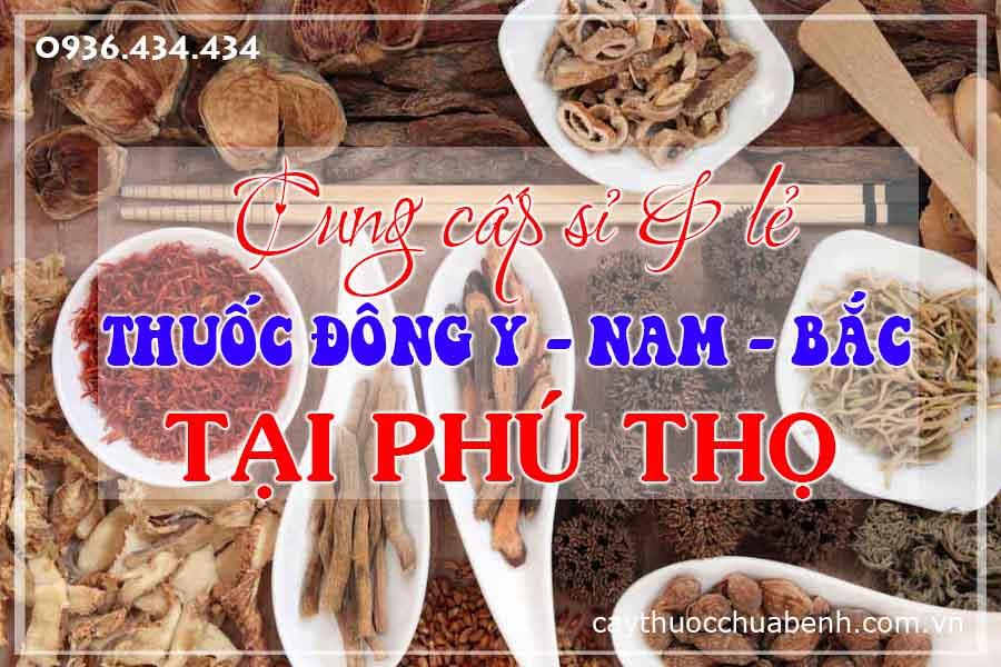 phu-tho-mua-ban-si-le-thuoc-dong-y-nam-bac-ctyduoclieuhonglan