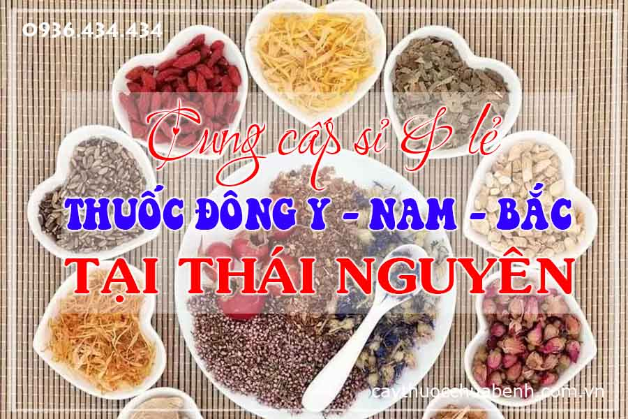 thai-nguyen-mua-ban-si-le-thuoc-dong-y-nam-bac-ctyduoclieuhonglan
