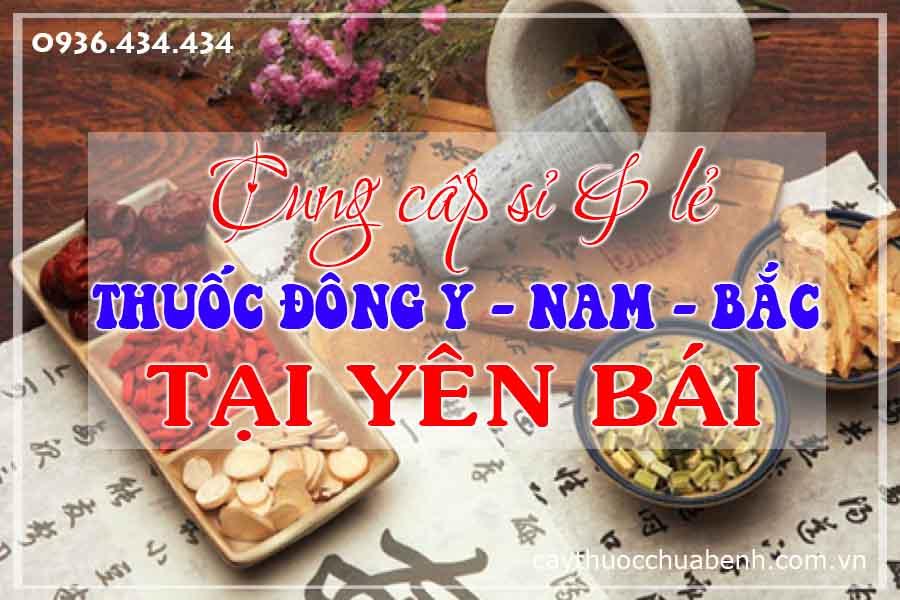 yen-bai-mua-ban-si-le-thuoc-dong-y-nam-bac-ctyduoclieuhonglan